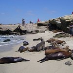 La Jolla Shore ( San Diego)