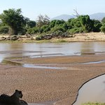 Lions in Samburu National Reserve