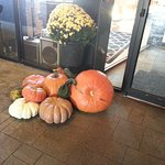 Showing a little love for Fall outside entrance to Pizza by Elizabeths