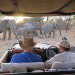 Incredible game drive at sunset in an open vehicle with a family group of elephants.
