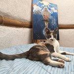 Priya, the ashram cat.