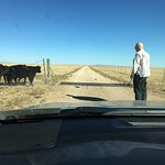 Persuading cows to move