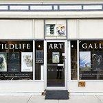 Launstein Imagery Wildlife Art Gallery
