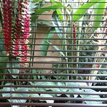 SURROUND VIEW FROM BATHROOM OF TROPICAL GARDEN ABSOLUTELY BEAUTIFUL