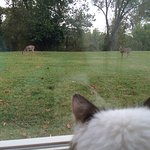 Kitty watching the deer