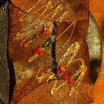 galette araignée pleurotes