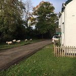 Sheep, Cows, Horses, Donkey's Pheasants... They all stroll past the house throughout the day