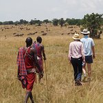 Walking to the Mara River from Duma Camp with Maasai guides, wildebeest in the distance.