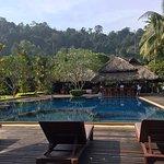 Zimmer Rainforest