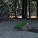 Daintree Wild Bed and Breakfast Photo