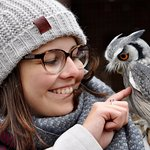 Interacting with the owls