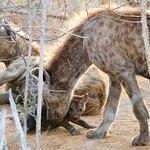 Photo de Molori Safari Lodge