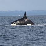 Happy orca