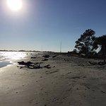 Foto di Barrier Islands Eco Tours