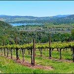 Vineyards and Views!