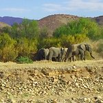 Sanbona Wildlife Reserve - Tilney Manor, Dwyka Tented Lodge, Gondwana Lodge Picture