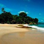 Playa Punta Uva en Puerto Viejo de Talamanca. Un lugar único donde la selva y el mar se juntan.. (226330957)