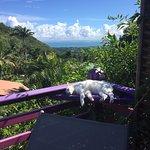 Vue depuis la terrasse, avec le chat des propriétaires qui nous rendait visite