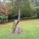 Peacock in Kyoto Gardens tree stump