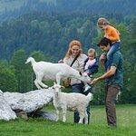 Streichelzoo mit Zwergziegen, Kaninchen, Minipigs, Pfau, Alpaka, Lamas und weiteren Tieren.
