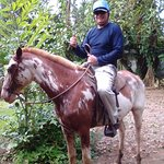 Horse back riding through the rain forest!