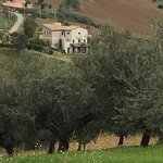 View of Cignale from above the olive trees