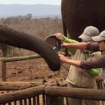 Have you ever fed an elephant?