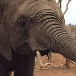 Have you looked an elephant in the eye?