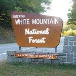 White Mountain Nat. Forest