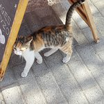 Piato's house cat encouraging passers by to read the specialities board