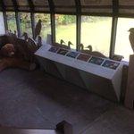 Bird exhibit