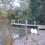 Lyrebird Ridge Organic Winery and Retreat Foto