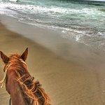 Horse and a beach