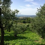 Photo of Vista sull'Oliveto