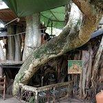 Trout Tree Foto