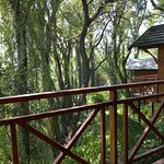 Log Unit Views over Indigenous Forest - Private Balconies