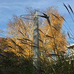 View from hammock of David Smalley sculpture and towering white birch.