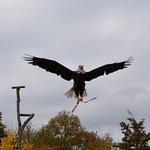 Wildpark und greifvogelzoo Potzberg
