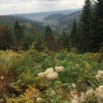 Schwarzwald Hochstrasse Foto