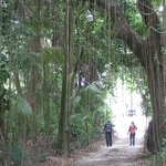 Path from Mongoose Apts. to Beach in Cane Garden Bay