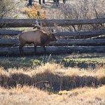 Photo de Rocky Mountain Wildlife Park
