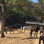 3rd visit to North Mountain Horse Ranch..check these out