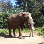 Photo de Elephant Sanctuary
