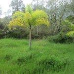 Silver Falls Ranch Palm Tree