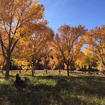 Meadow with cottonwoods in front of Canon del Rio.
