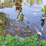 Inata Bisma Resort & Spa Ubud Foto