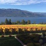 View of vines at Arrowleaf