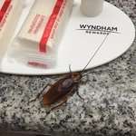 One of three (or the same one three times) cockroaches in the first room I was issued