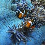 Dream Divers Gili Air