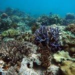 Beautiful, vibrant coral